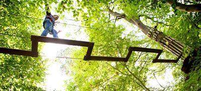 Go Ape Treetop